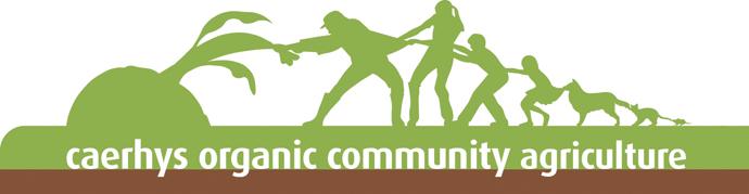 COCA Logo stripe